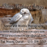 We are also available to shoot photo sessions. for your needs.